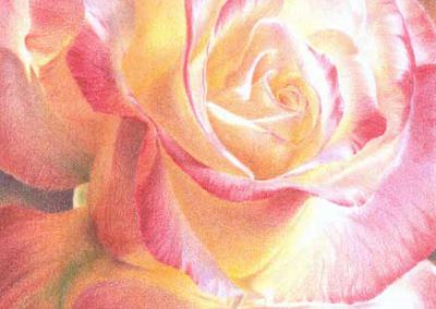 Fragrant by Kristen Doty - colored pencil